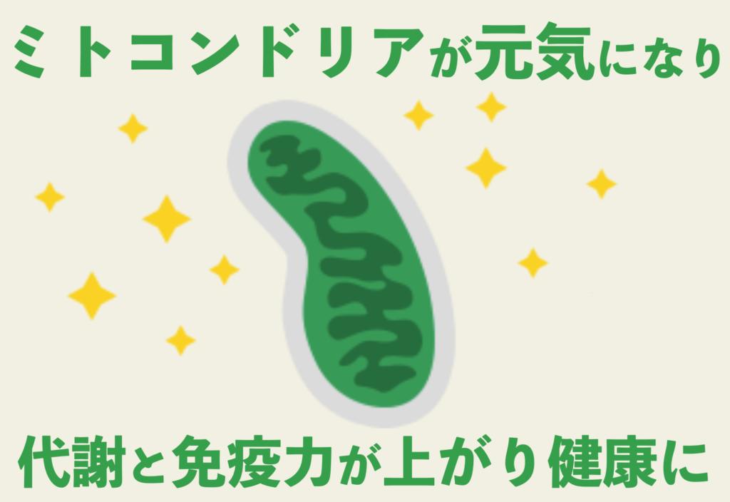 セルセンシャル(cellsentials) ミトコンドリア