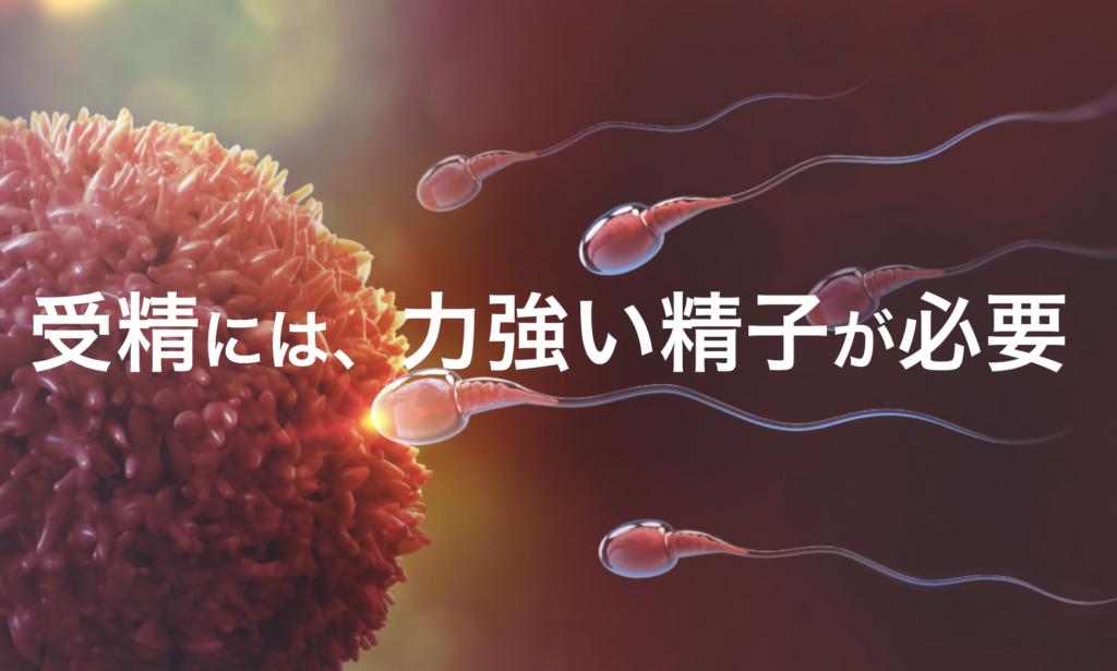 力強い精子